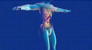 Guía anatómica de los músculos del cuerpo
